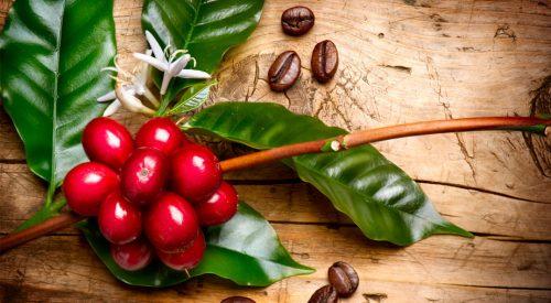 Od ziarenka kawy do amazońskiej dżungli