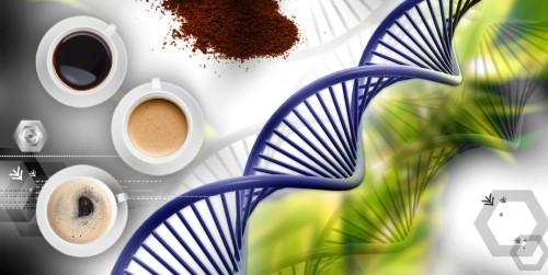 DNA kawy